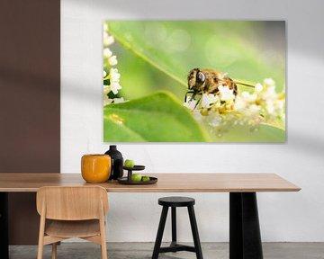 Blinde Biene von Elma Nengerman