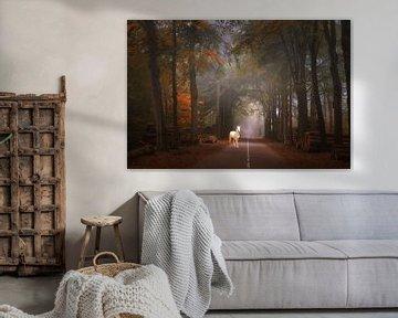 Sprookjes bos . van Saskia Dingemans