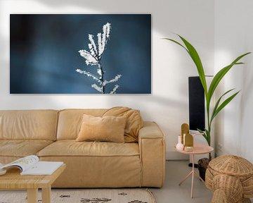 Eiskristalle von BVpix