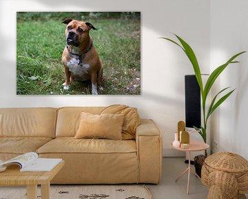 Bruine stafford hond zittend in het bos kijkend in de camera van JGL Market
