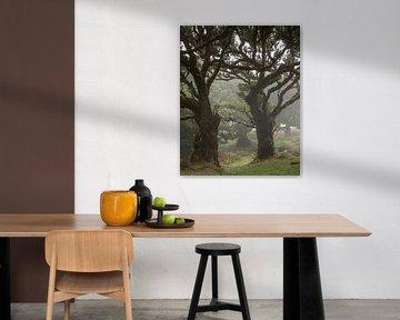 Posto florestal fanal van Edwin Kooren
