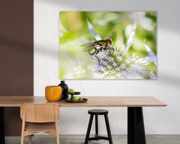 Makro einer Fliege von ManfredFotos