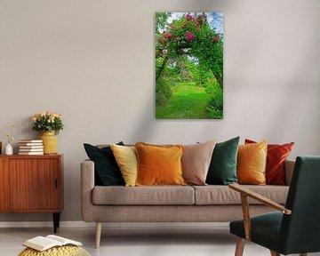 Kletterrose im Garten von ManfredFotos