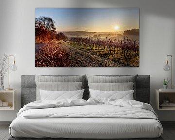 Vignoble Sunrise Dodeman sur Rob Boon