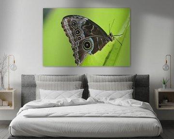 Ik heb honger! Vlinder eet aan een blaadje von de buurtfotograaf Leontien