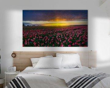 Tulpen zover het oog reikt van Rene Siebring