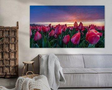 Dauwdruppels op de tulpen van Rene Siebring