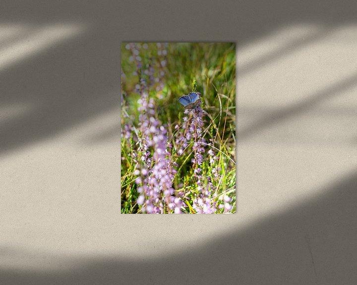 Beispiel: Schönes Ikarusblau in der Heidelandschaft von Robbert De Reus