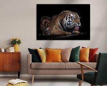 Amurtiger auf schwarzem Hintergrund auf einem Baumstamm, einem Baumstamm Ein kräftiger roter Tiger l von Michael Semenov
