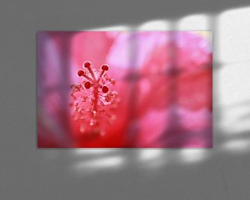 Pink Explosion von Ernie Mussche