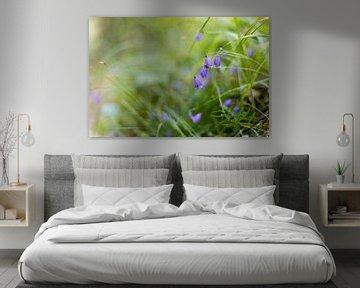 Waldblumen von Michael Wolf