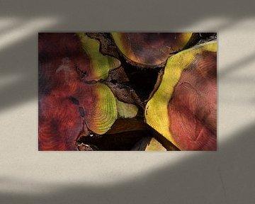 Mammoetboom Plaats van Macht van Ingo Laue