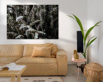 Getrockneter Lavendel Nahaufnahme | Niederlande (Holland) von Trix Leeflang