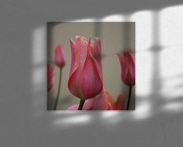 Tulp upclose van Frederique Richard
