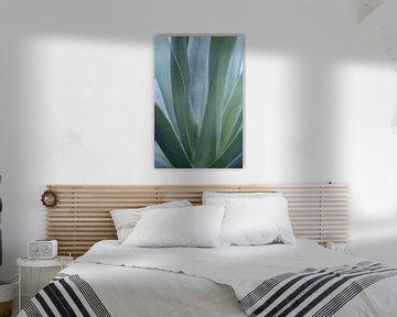 Aloe-vera-Blätter in sanften Grün-Blau-Tönen.