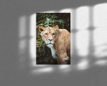 Tiger aus nächster Nähe von Youri Zwart