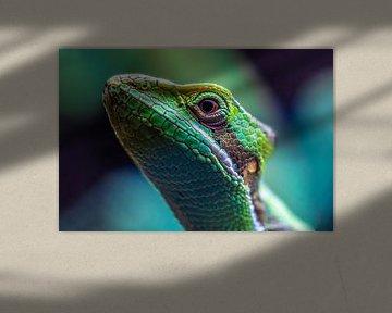 Kameleon van Frames by Frank