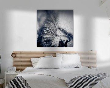 Frozen X von Rob van der Pijll