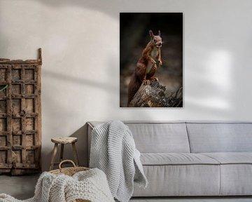 Eekhoorn is nootjes aan het verzamelen van Marjolein van Middelkoop