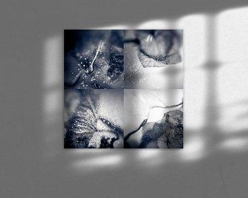 Frozen Collage II von Rob van der Pijll