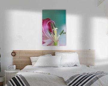 Tulpe  van Roswitha Lorz