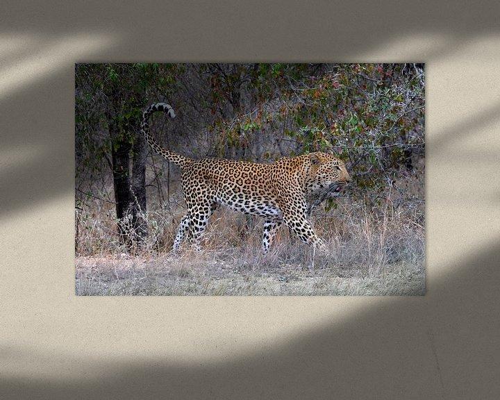 Beispiel: Leopard, Krüger-Nationalpark, Südafrika von Reisverslaafd