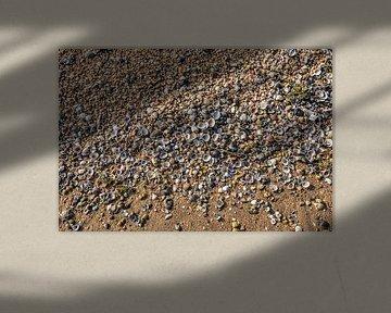 Schelpen en grind aangespoeld op een rivierstrandje in Nederland
