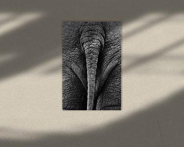 Olifantenstaart zwart-wit