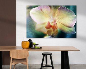 Orchidee1 von Roswitha Lorz