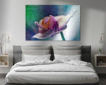 Orchidee2 von Roswitha Lorz