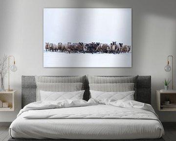 Kudde schapen in een weide in de sneeuw tijdens de winter van Sjoerd van der Wal