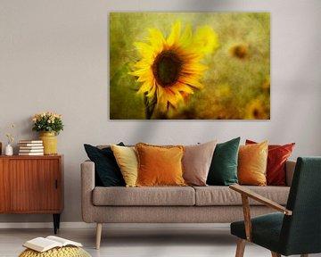 sunflowers von Claudia Moeckel
