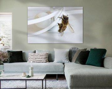 Bee klimt op koptelefoon van Besa Art