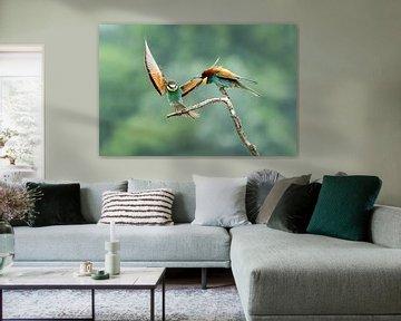 Bijeneter (Merops apiaster) van Gert Hilbink