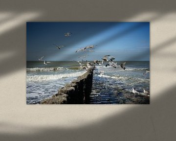 Opvliegende meeuwen van Jolanda Kraus