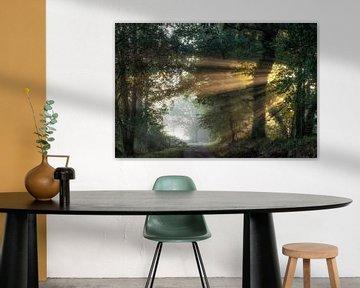 Zonneharpen aan het oud kanaal in Beek van Peschen Photography