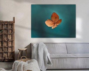 Blaue und orangefarbene getrocknete Hortensienblüten von Kyle van Bavel