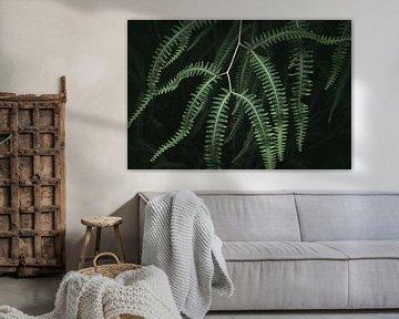 Eine brasilianische Dschungelpflanze aus der Nähe von Felix Van Leusden