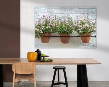 Zartrosa Blumen in Töpfen an der Wand.