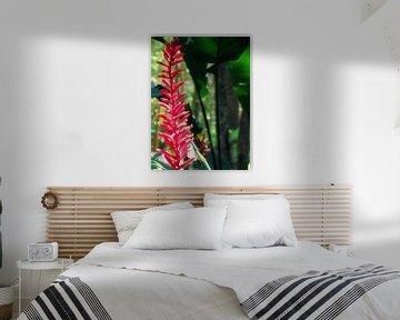 Bloem in de jungle von Daphne Wessel