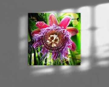 Purple & pink passion flower von Daphne Wessel