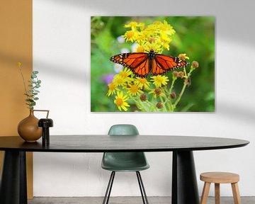 Monarchfalter. von Jose Lok