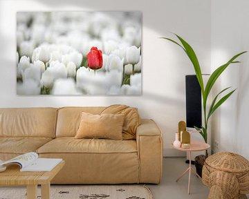 Verirrte Tulpe von David van der Schaaf