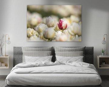 Rot mit weißer Tulpe von David van der Schaaf