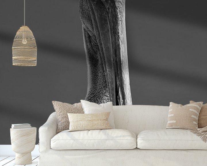 Sfeerimpressie behang: Pelikaan van Wim Slootweg