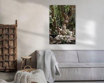 Sprookjesachtige boom in Griekenland van Monique Giling