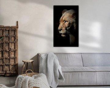 Löwin mit geschlossenen Augen von Lynlabiephotography