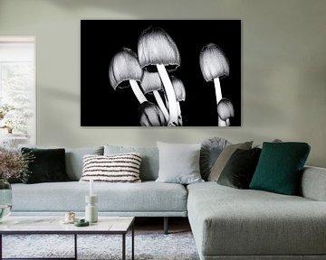 Glimmerinktzwam in zwartwit van Jan van der Knaap
