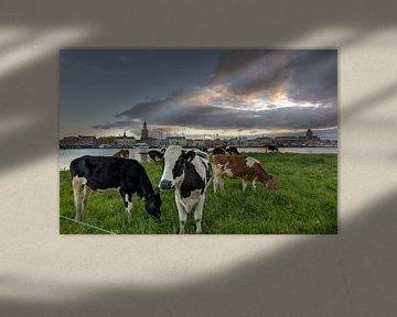 Façade de la ville de Kampen avec des vaches