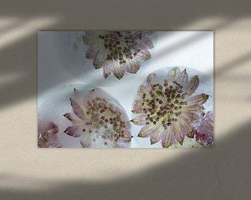 Pinke Blüten in Eiskugeln 3